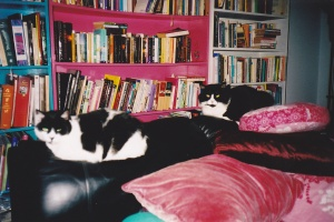 My old house- books and space for cats.
