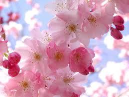 the joys of Spring.