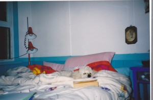 The dog could even read and still sleep.